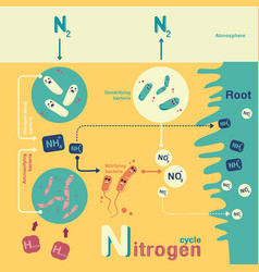Nitrogen cycle vector