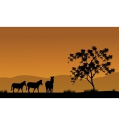 Silhouette of zebra in fields africa vector