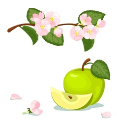 Green apple and flowers vector