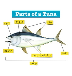 Diagram showing different parts of tuna vector