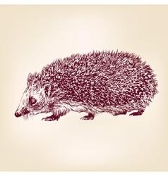 Hedgehog hand drawn llustration realistic sketch vector
