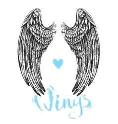 Wings of bird vector