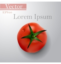 Tomato top side background vector