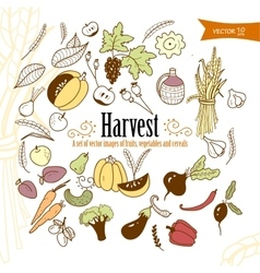 harvest2 vector image vector image