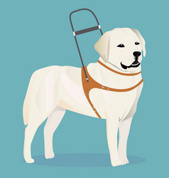labrador retriever guide dog vector image