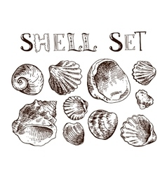 Shell hand drawn vector image vector image