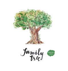 family tree old olive vector image vector image