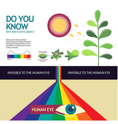 how you know why are plant green vector image vector image