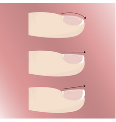 varieties of different forms and types of nail vector image vector image