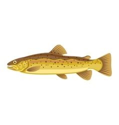 Hucho taimen siberian salmon fish vector