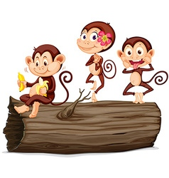 Three monkeys on the log vector image vector image