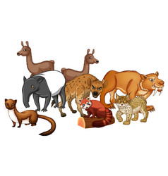 Group of wild animals vector