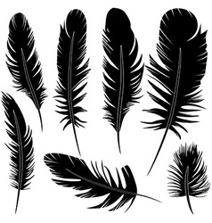 Feather of bird set vector image