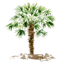 Watercolor palm tree vector