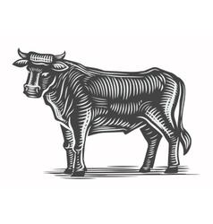 hand drawn beef vector image vector image