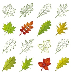 Leaves of plants and pictograms set vector