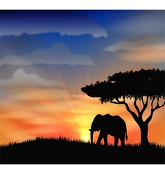 Sunset background with animal elephant vector
