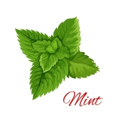 Mint leaves bunch isloated emblem vector