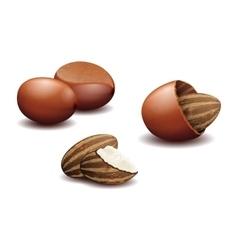 Shea nut butter vector