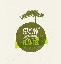 grow where you are planted motivation quote on vector image vector image