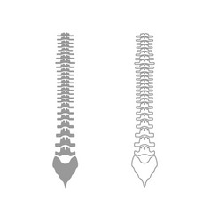 Human spine the grey set icon vector