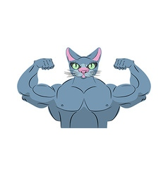 Strong cat power animal bodybuilder pet with big vector