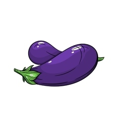 Eggplant on white background vector