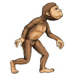 Evolving ape vector