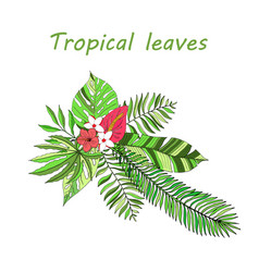 floral paradise hand drawn tropical leaves vector image