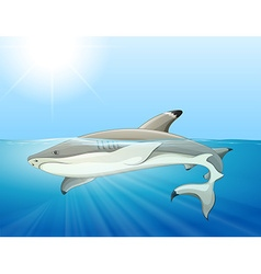 Wild shark swimming in the sea vector image