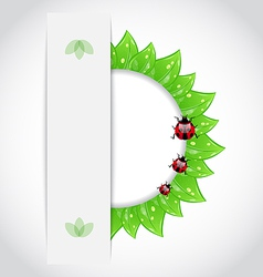 Eco green leaves with ladybugs vector image vector image