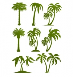 Palm tree silhouettes vector