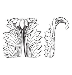 Acanthus leaf front and side views vintage vector