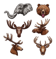 African animal and forest mammal sketch set vector