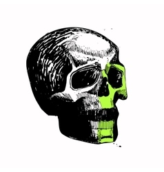 Skull sketch hand draw pen ink relaxed vector