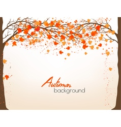 Autumn background with a tree and colorful leaves vector image