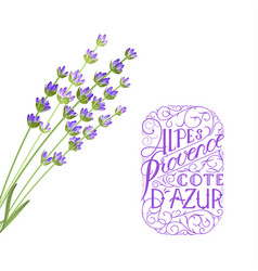 The lavender elegant card the lavender elegant vector