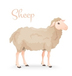 Realisic cute sheep standing on the gras with farm vector