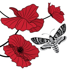 moth and red poppy vector image vector image