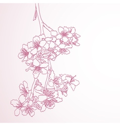 blossoming tree line art vector image