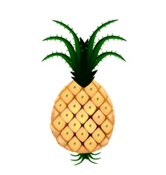 Fresh organic pineapple on a white background vector