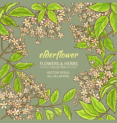 Elderflower frame vector