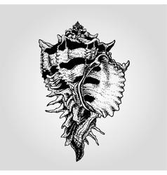 Hand drawn vintage sea shell vector image