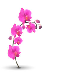 Naturalistic beautiful colorful pink orchid on vector