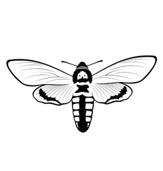 Death s head hawkmoth vector
