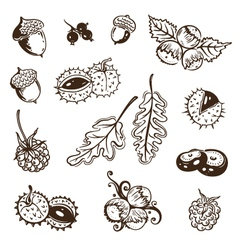 Autumn leaves nuts vector