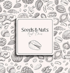 Seamless pattern with seeds and nuts on a white vector image