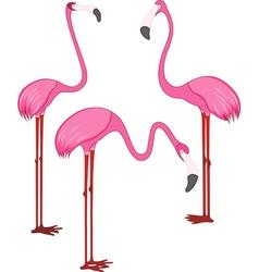 Three different beautiful pink flamingos vector