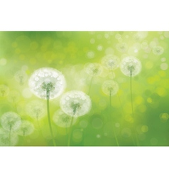 Spring background field vector