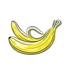 Banana on white background vector